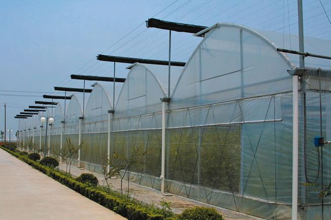 池州冬季温室大棚施肥十大建议